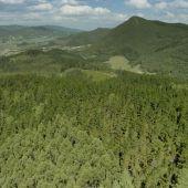 La réplica del Bosque de Oma se ubicará en una parcela contigua al enclave original