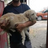 Perro en brazos de un voluntario de Aanipal