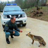 Agente del SEPRONA con un zorro