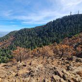 El pinsapar afectado en el incendio de Sierra Bermeja