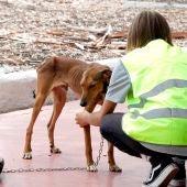 La nueva ley de protección animal considerará como hijos a los perros en caso de divorcio