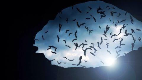 Murciélagos sobre una cueva
