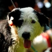 El Gobierno apuesta por crear refugios para mascotas de mujeres maltratadas