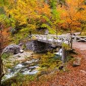 Ruta por el Bosque de Corbalán