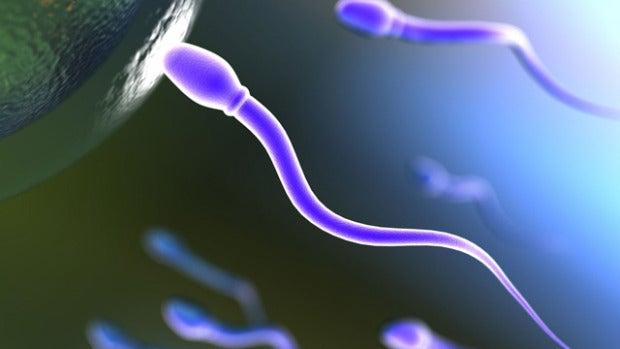 Historia del primer esperma que fue visto