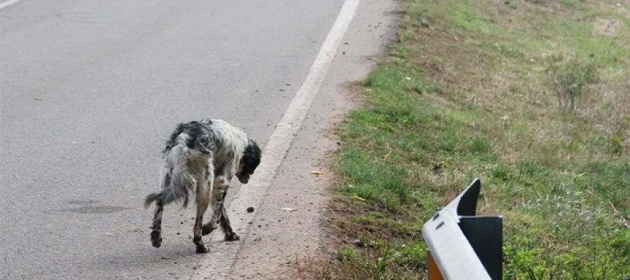 Perros abandonados, un drama
