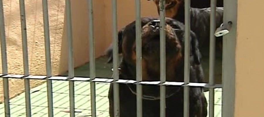Dos perros de raza peligrosa hieren gravemente a un niño en Boadilla del Monte