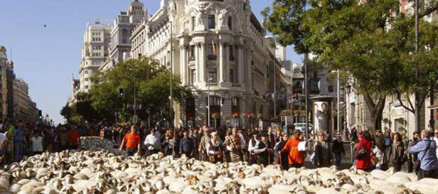 Un rebaño de 5.000 ovejas tomó las calles de la capital