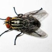 Las moscas, los nuevos enemigos a batir en los baños de Pekín.