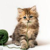 El gatito con un ovillo de lana