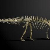 Imagen de 'Misty', el esqueleto de dinosaurio que saldrá a subasta