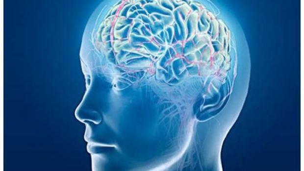 El cerebro humano genera neuronas nuevas hasta los 90 años