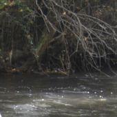 Imagen del río Henares