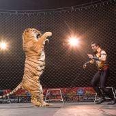 Animales en los circos