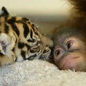 Empatía entre animales
