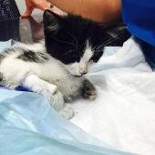 Broken, un gato usado como balón por unos niños hasta casi su muerte