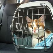 Gato en trasportín