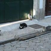 Los gatos callejeros son responsables de la desaparición de especies autóctonas
