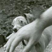 Cachorro de perro mordiendo mano