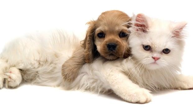 Las entrañables mascotas que acompañan cada día a los oyentes