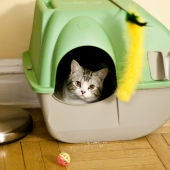 Gato en arenero