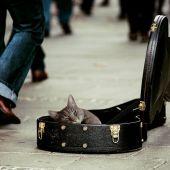 Gato en funda de guitarra