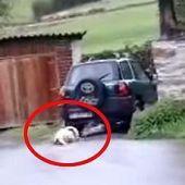 Vecino de Tineo arrastra con su coche a su perro