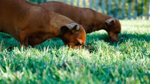 Perros en jardín