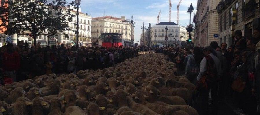 Ovejas por las calles de Madrid