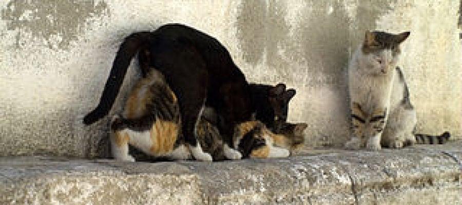 Gatos callejeros
