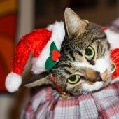 Gato navideño
