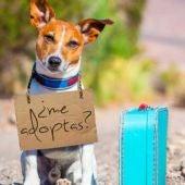 Ideas para adoptar a un animal