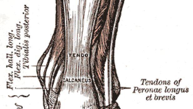 Prevenció de lesions en els tendons a través dels suplements alimentaris