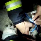 Gato salvado por los bomberos de Vilagarcía