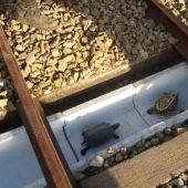 Tuenel para tortugas en Japón