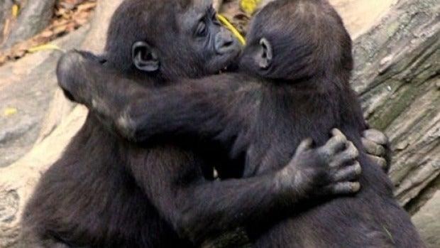 """Afinando los sentidos: """"Los chimpancés macho no pegan a sus hembras, tendríamos que tomar ejemplo"""""""
