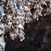 Cueva de los murciélagos en Pura Goa Lawah, Denpasar Utara, Indonesia