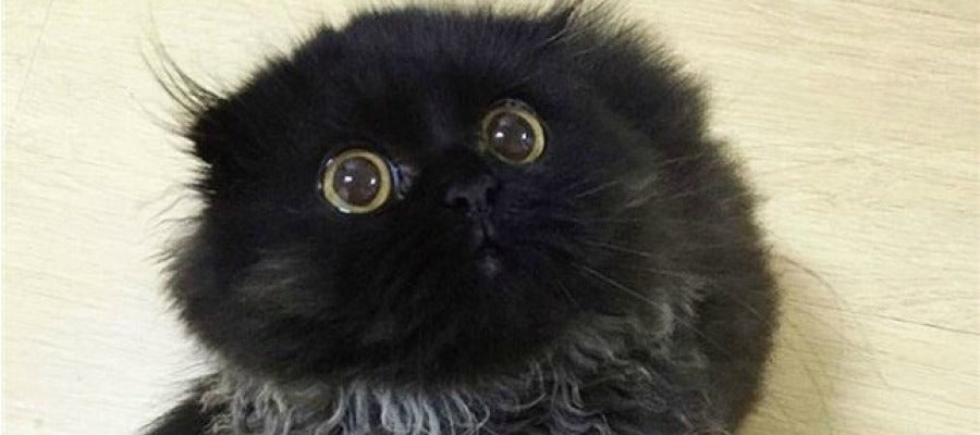 Gimo, el gato viral