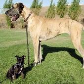 Perro grande y perro pequeño