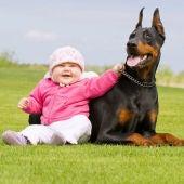 Dóberman con bebé