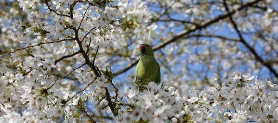 Imagen de un pájaro sobre un árbol en flor