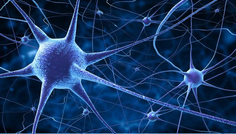 Las neuronas que alberga nuestro cerebro