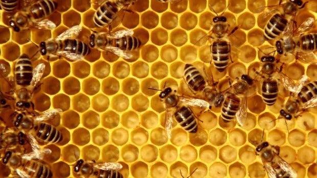 Eureka: La extinción de las abejas y el fin del mundo