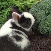 CONEJOS - ¿Qué verduras pueden tomar los conejos