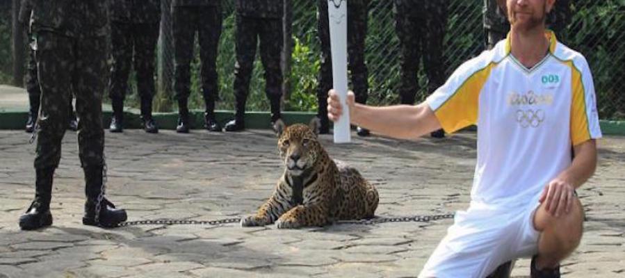 Imagen del jaguar antes del incidente