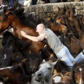 La Rapa Das Bestas, la fiesta de interés turístico internacional en Pontevedra en la que el mundo salvaje se rebela ante el hombre
