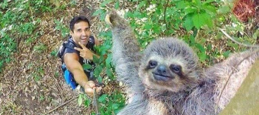 La simpática foto del turista con el oso perezoso