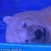 El oso más triste del mundo