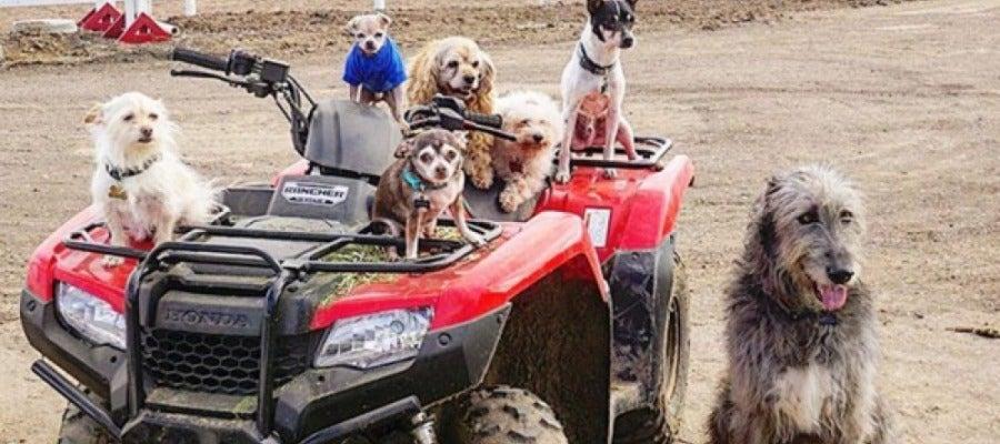 """Los perros """"invisibles"""" adoptados por Steve Creig"""
