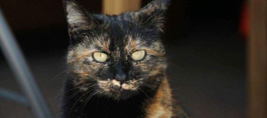 El gato Tink